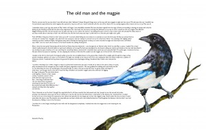 'The Old Man and the Magpie' - short story.