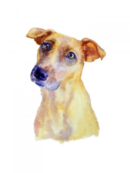 Jack Russell in watercolour paints.