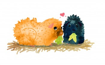 Guineapigs_illustration