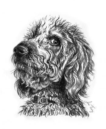 Dog_Illustration_Portrait